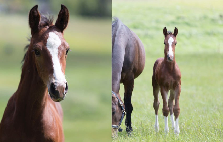 HE15_Coventry_Foal_3